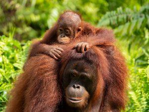 Kalimantan-Borneo